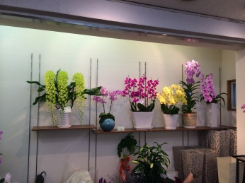 Some of these orchid arrangements were priced around $300 USD.