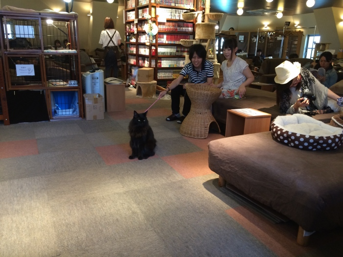 Cat cafes - where being ignored by the other living beings around you is half the fun.
