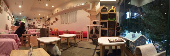 My latest cat cafe visit
